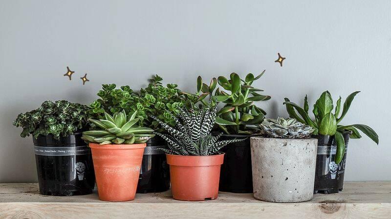 9 Tanaman Hias Yang Cocok Untuk Di Dalam Ruangan